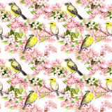 Cherry blossom - apple, sakura flowers, birds. Floral seamless pattern. Watercolor. Cherry blossom - apple, sakura flowers and birds. Floral seamless pattern vector illustration