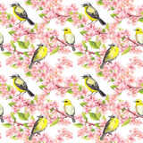 Cherry blossom - apple, sakura flowers, cute birds. Floral seamless background. Watercolor Royalty Free Stock Photo