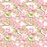 Cherry blossom - apple, sakura flowers. Floral seamless pattern. Watercolor. Cherry blossom with apple, sakura flowers. Floral seamless pattern. Watercolor royalty free illustration