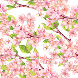 Cherry blossom - apple, sakura flowers . Floral seamless pattern. Watercolor. Cherry blossom with apple, sakura flowers . Floral seamless pattern. Watercolor vector illustration