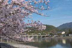 Cherry blossom, Arashiyama in spring,Kyoto, Japan Royalty Free Stock Image