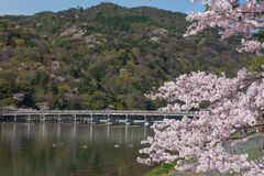 Cherry blossom, Arashiyama in spring,Kyoto, Japan Stock Photos