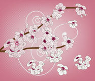 Cherry blossom - artistic branch Stock Photography