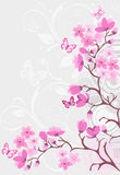 Cherry Blossom Background Royalty Free Stock Images