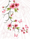 Cherry blossom background Stock Photos