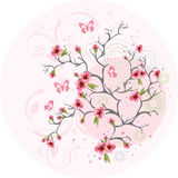 Cherry blossom background Royalty Free Stock Photography