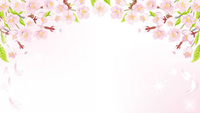 Cherry Blossom background-above EPS10 Royalty Free Stock Photos