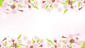 Cherry Blossom background-frame EPS10 Royalty Free Stock Images