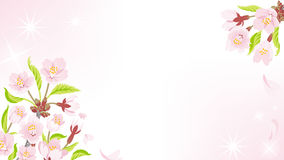 Cherry Blossom background-Ornament EPS10 Stock Images
