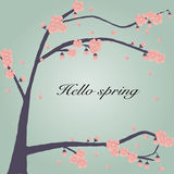 The cherry blossom background wit hello spring word Stock Images
