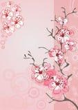 Cherry blossom background Stock Photos