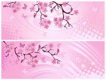 Cherry blossom, banner. Stock Image