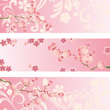Cherry blossom banner set Royalty Free Stock Photo