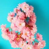 Cherry-blossom Royalty Free Stock Photography