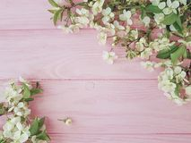 Cherry beauty blossom on a pink wooden background, spring stock photos