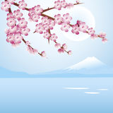 Cherry blossom blue sky. A beautiful cherry tree blossoms against a blue night sky. Snow capped Mount Fuji is on the background Royalty Free Stock Photography