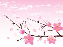 Cherry blossom branch. A branch of blossoming branch of cherry tree. Vector illustration Royalty Free Stock Photography