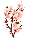 Cherry blossom branch abstract background. Abstract background with cherry blossom branch isolated stock illustration
