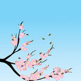 Cherry blossom branch with bees Royalty Free Stock Photos