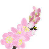Cherry blossom branch with bees Stock Images