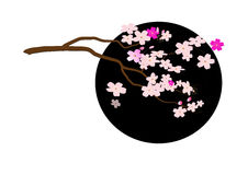 Cherry blossom branch on black circle ,Vector illustration Stock Photography