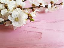 Cherry blossom branch decor season vintage spring on a pink wooden background stock photos