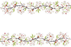 Cherry Blossom Branch frame Stock Photos