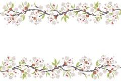Cherry Blossom Branch frame Stock Photos