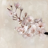 Cherry blossom branch. Oil painting Royalty Free Stock Images