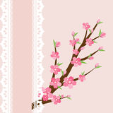 Cherry blossom branch on pink background Stock Images