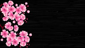 Cherry blossom branch with pink flowers on a black wood texture. Vector illustration for decorating banners, flyers, posters, websites, packaging, covers Stock Photos