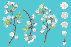 Cherry Blossom Branch set Stock Image