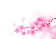 Cherry Blossom Branch Vector Royaltyfri Bild