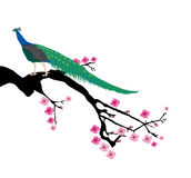 Cherry Blossom Branch Stock Images