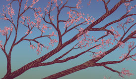 Cherry Blossom Branches - Digital Painting. Digital painting of cherry blossoms surrounded by a blue sky Stock Image