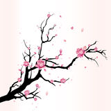 Cherry blossom. Branches cherry blossom flower vector Royalty Free Stock Photos