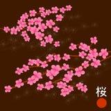 Cherry Blossom Branches rosado Imágenes de archivo libres de regalías