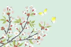 Cherry Blossom branches and two butterflies Stock Photo