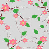 Cherry blossom seamless pattern Royalty Free Stock Photos
