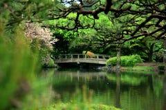 Cherry blossom and bridge Stock Photo