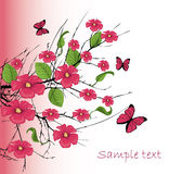 cherry blossom with butterfly Stock Photo