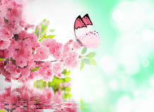 3f330a686 Cherry Blossom Butterfly Stock Images - Download 1,208 Royalty Free ...