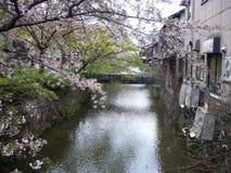 Cherry Blossom Canal Fotografering för Bildbyråer