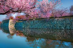 Free Cherry Blossom.Canal Around Himeji Castle In Hyogo, Himeji-Jo Castle Is Famous Travel Spot In Kansai Area In Japan Stock Photo - 172445240