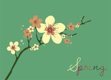Cherry Blossom card design Stock Images