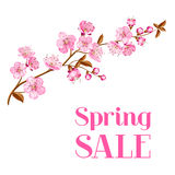 Cherry blossom card Royalty Free Stock Image