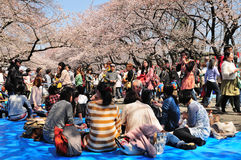 Cherry blossom celebration Royalty Free Stock Image