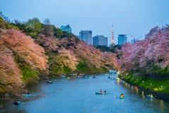 Cherry blossom at chidori ga fuchi, tokyo, japan royalty free stock images