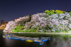 The cherry blossom at Chidorika-Fuji in Tokyo Stock Photography
