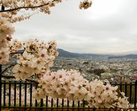 Cherry blossom city and mountain viwe royalty free stock photos